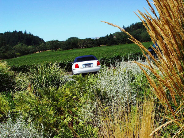 Healdsburg Wine Tours Lincoln Town Car in the vineyards
